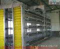 cages en batterie de poules pondeuses