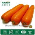 extrait de carotte naturel en poudre