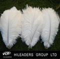 RT17 carnaval de color blanco de plumas de avestruz