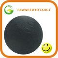 algas marinas de color marrón extracto en polvo