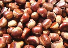 tamaño grande prima fresca castaña en shell