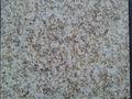 china natural de granito amarillo dorado granito