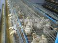 china venta de pollos de engorde automática jaula para granja de pollos