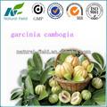 garcinia cambogia el ácido hidroxicítrico en gran stock bajar de peso