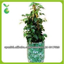 caliente-venta interior ¿Pueden las plantas