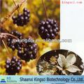 profesional de la exportación de la empresa de raíces de ginseng siberiano polvo del extracto