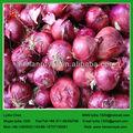 Shandong cebolla fresca
