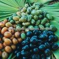 Extracto de Palma enana Americana(Serenoa repens)