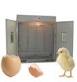 FRD-E (incubateur complètement automatique de volaille pour des oeufs à couver)