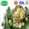 hca50%- 75% extracto de garcinia cambogia