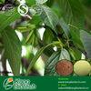 /p-detail/5-99-de-%C3%A1cido-clorog%C3%A9nico-de-hierbas-Eucommia-Extracto-de-hoja-300000478065.html
