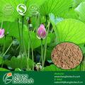 Herbaria china Pérdida de Peso Natural Ingredients nuciferina Polvo
