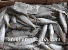 peixe sardinha nome científico