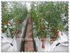 /p-detail/Chino-ligero-y-transpirable-agr%C3%ADcola-pp-tela-no-tejida-del-paisaje-300000716595.html