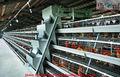 Venta al por mayor del pollo jaula precios