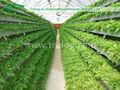 Agricultura hidropónica