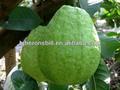 jugo de guayaba concentrado a partir de la extracción de guayaba fresca