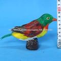 aves de plumas reales para la venta
