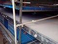 China vende más reciente automático precio h- tipo jaula de pollos de engorde para granja de pollos