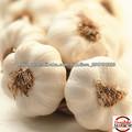 2013 agrícolas da china nova cultura do alho fresco branco