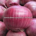 cebolla fresca