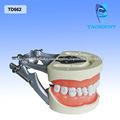 venta caliente de los dientes dentales y los modelos de la mandíbula
