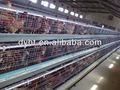 Un- tipo jaula de pollos de engorde