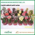 Cactus Vivero de interior de la floración de las plantas injertado rojo de cactus plantas