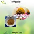 Orgánica extracto de echinacea purpurea/de alta calidad de echinacea purpurea