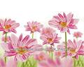 hermosos murales de papel tapiz de flores de color rosa para requisitos particulares para la habitación de cama