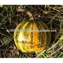 semente de abóbora óleo