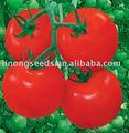 f1 híbrido de tomate de semillas para la venta
