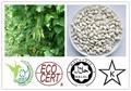 Ingrediente para bajar de peso blanco 5:1 judíasverdes extracto