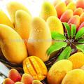 mango de áfrica extracto de la semilla