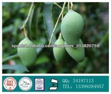 GMP 100% Mangiferin naturales