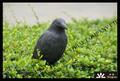 material de plástico nueva actualización de la espuma xpe vivo cuervo decoy