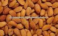 Amarga semilla de albaricoque/amarga semilla de albaricoque/cruda chino de almendra amarga