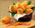 Mango de áfrica extracto de la semilla 4:1
