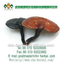 de alta calidad de ganoderma lúcido extracto en polvo
