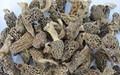 setas morel tratar la indigestión secos morchella esculenta