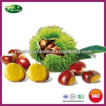 2013 nueva cosecha castaño chino fresco frutossecos a granel para la venta