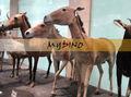 Meu dino- animal manequins lojas cavalo equipamentos