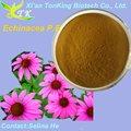 de alta calidad de extracto de echinacea purpurea en a granel en grandes de la tienda