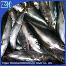 la lumière de capture du poisson congelés maquereau du pacifique
