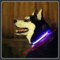 Productos Para Mascotas/Luz de Seguridad Para Perros/Collar de Seguridad LED para Perro
