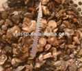 Suillus granulatus setas en salmuera