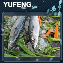 pescados de la caballa congelada