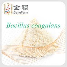 polvo de Bacillus coagulans