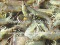 camarón blanco congelado vannamei pud devined pelados