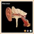 modelo de orelha com aurícula orelha anatomia humana modelo